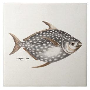 Luna luna gifts gift ideas zazzle uk for Opah fish price