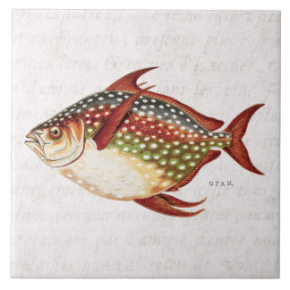 Vintage 1800s Opah Tropical Sporting Fish Drawing Tile