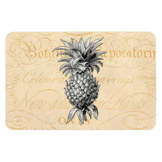 Vintage 1800s Pineapple Illustration Botany Magnet