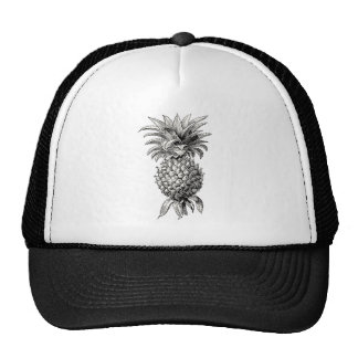 Vintage 1800s Pineapple Illustration Pineapples Cap