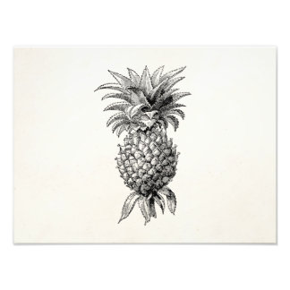 Vintage 1800s Pineapple Illustration Pineapples Photograph