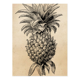 Vintage 1800s Pineapple Illustration Pineapples Postcard