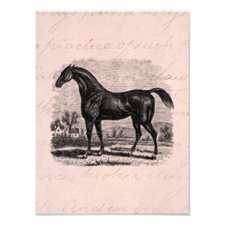 Vintage 1800s Race Horse Retro Thoroughbred Horses Art Photo