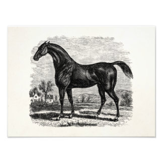 Vintage 1800s Race Horse Retro Thoroughbred Horses Photographic Print