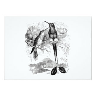 Vintage 1800s Racket-Tail Hummingbird Racquet Tail 14 Cm X 19 Cm Invitation Card