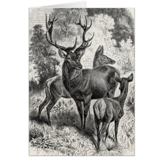 Vintage 1800s Red Deer Illustration Stag Doe Fawn Card