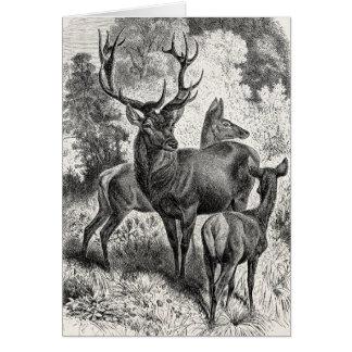 Vintage 1800s Red Deer Illustration Stag Doe Fawn Greeting Card
