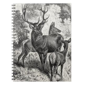 Vintage 1800s Red Deer Illustration Stag Doe Fawn Note Books