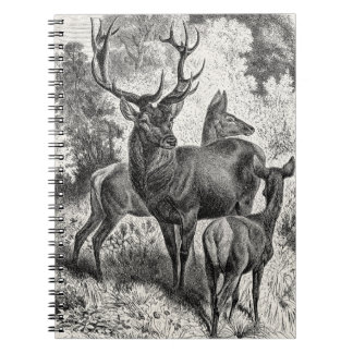 Vintage 1800s Red Deer Illustration Stag Doe Fawn Notebooks