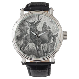 Vintage 1800s Red Deer Illustration Stag Doe Fawn Watch