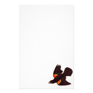 Vintage 1800s Red Winged Black Bird Illustration Stationery