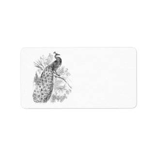 Vintage 1800s Retro Peacock Illustration Template Label