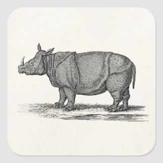Vintage 1800s Rhinoceros Illustration - Rhino Square Sticker