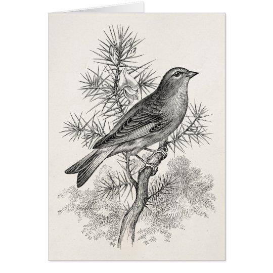 Vintage 1800s Rose Linnet Song Bird Finch Birds Card