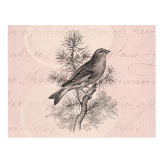 Vintage 1800s Rose Linnet Song Bird Finch Birds Postcard