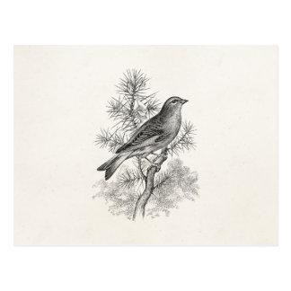 Vintage 1800s Rose Linnet Song Bird Finch Birds Postcard