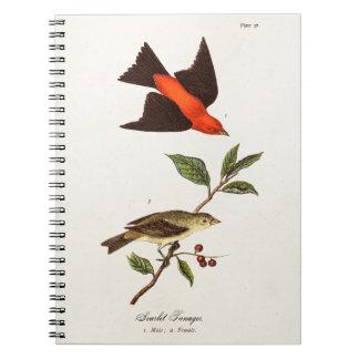 Vintage 1800s Scarlet Tanager Bird Songbird Birds Spiral Notebook