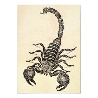 Vintage 1800s Scorpion Illustration - Scorpions 13 Cm X 18 Cm Invitation Card