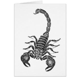 Vintage 1800s Scorpion Illustration - Scorpions Note Card