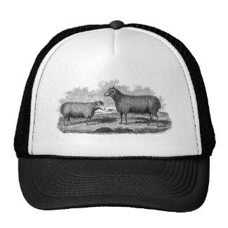 Vintage 1800s Sheep Ewe Illustration Retro Farm Cap