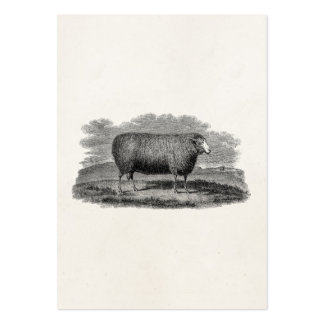 Vintage 1800s Sheep Ewe Illustration Retro Wool Pack Of Chubby Business Cards