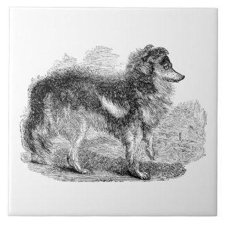 Vintage 1800s Shepherd's Dog - Sheep Dogs Tile
