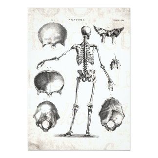 Vintage 1800s Skeleton Antique Anatomy Skeletons 13 Cm X 18 Cm Invitation Card