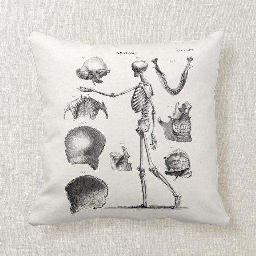 Vintage 1800s Skeleton Antique Anatomy Skeletons Pillows