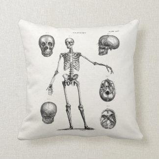 Vintage 1800s Skeleton Antique Anatomy Skeletons Cushion