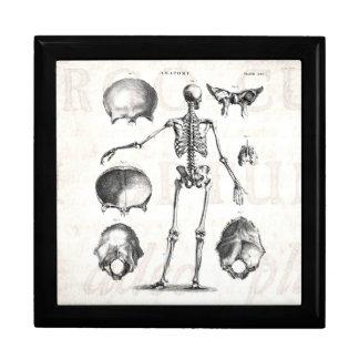 Vintage 1800s Skeleton Antique Anatomy Skeletons Large Square Gift Box