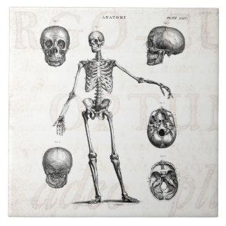 Vintage 1800s Skeleton Antique Anatomy Skeletons Large Square Tile