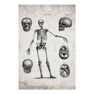 Vintage 1800s Skeleton Antique Anatomy Skeletons Poster