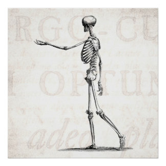 Vintage 1800s Skeleton Antique Anatomy Skeletons Poster