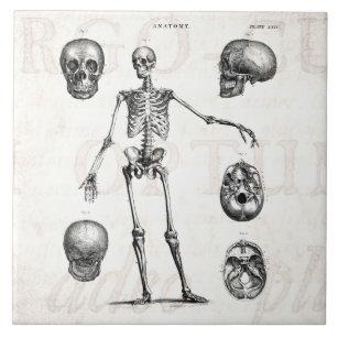 Vintage 1800s Skeleton Antique Anatomy Skeletons Tile