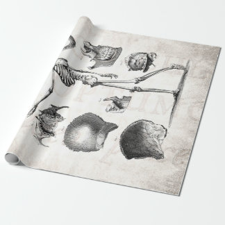 Vintage 1800s Skeleton Antique Anatomy Skeletons Gift Wrap Paper