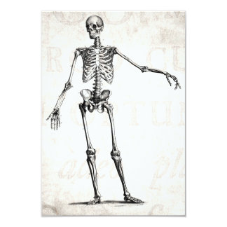 Vintage 1800s Skeleton Retro Skeletons Anatomy Card