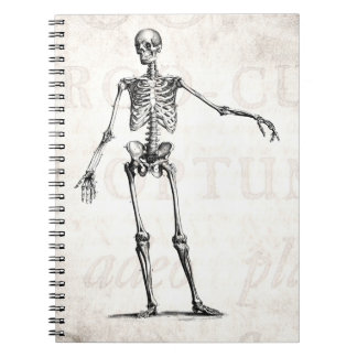 Vintage 1800s Skeleton Retro Skeletons Anatomy Notebooks