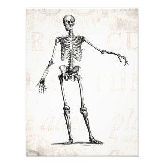 Vintage 1800s Skeleton Retro Skeletons Anatomy Art Photo