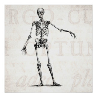 Vintage 1800s Skeleton Retro Skeletons Anatomy Poster