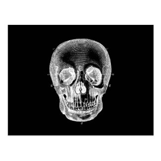 Vintage 1800s Skull Retro Anatomical Black White Postcard