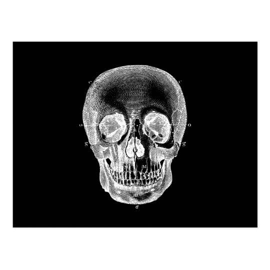 Vintage 1800s Skull Retro Anatomical Black White Postcard