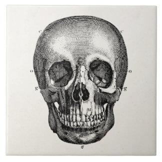 Vintage 1800s Skull Retro Skulls Skeleton Large Square Tile
