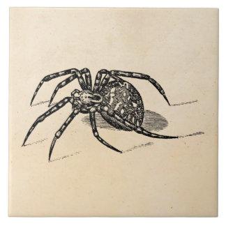 Vintage 1800s Spider Illustration Spiders Template Tile