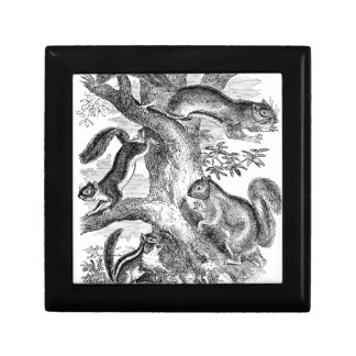 Vintage 1800s Squirrels Illustration - Squirrel Gift Box