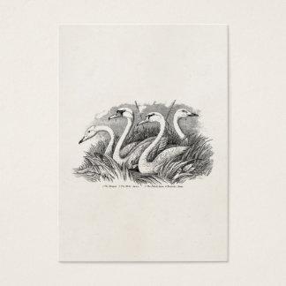 Vintage 1800s Swan Bird Swans Old Birds Template Business Card