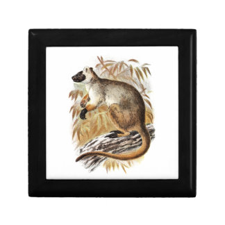 Vintage 1800s Tree Kangaroo Old Kangaroos Template Gift Box