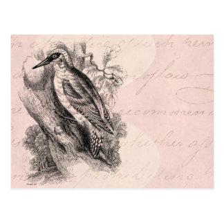 Vintage 1800s Woodpecker Bird Wood Pecker Birds Postcard