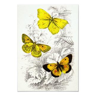 Vintage 1800s Yellow Orange Butterflies Template 9 Cm X 13 Cm Invitation Card