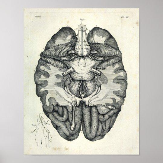 Vintage 1805 Anatomical Brain Cranial Nerves Print