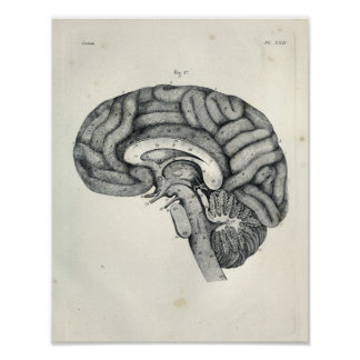 Vintage 1805 Anatomical Brain Median Surface Print